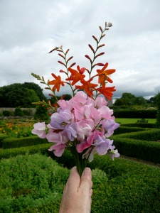 flowers in Ireland