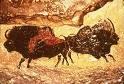 bison lascaux